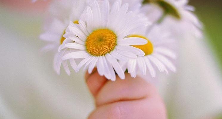 vendita-fiori-on-line_NCG21[1]