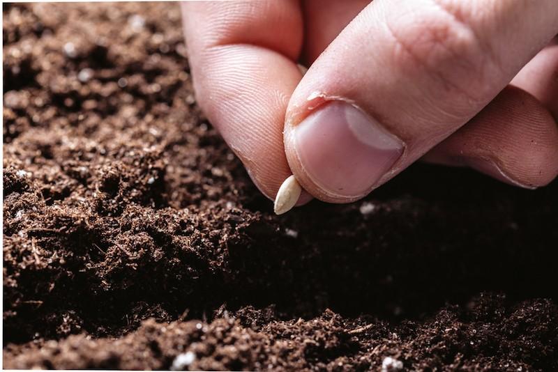 piantare-un-seme-blog-rioverde[1]