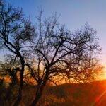 Filastrocca: Albero e Sole