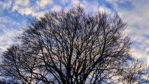 come un grande albero